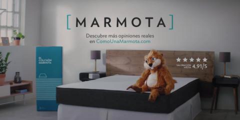 marmota-2